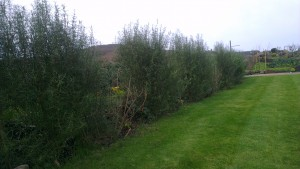 Garden with hedge